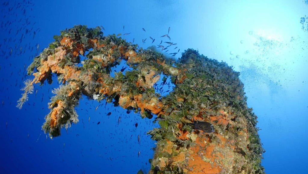 Ventotene relitto Santa Lucia immersioni a Ventotene con Oceania
